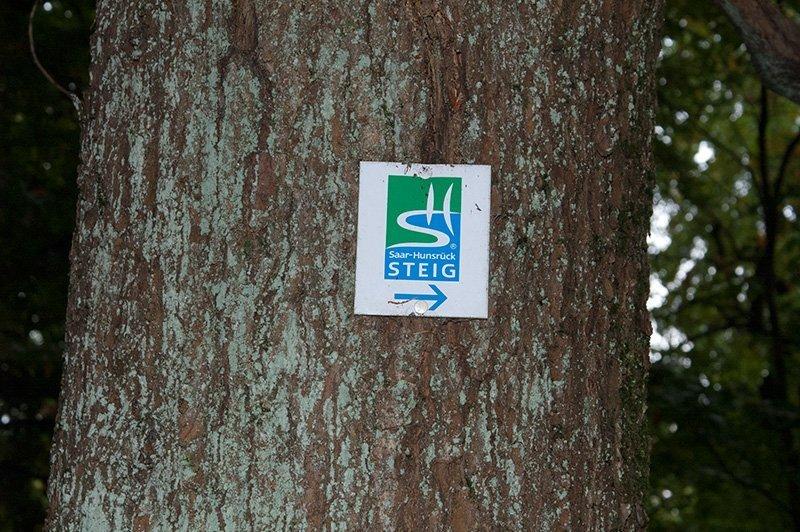 Markierung für den Saar-Hunsrück-Steig an einer alten Eiche