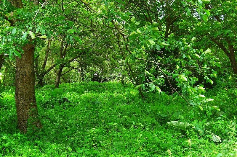 Grüne Hölle: Üppig wuchert die Natur in den Ahrauen nahe Rech
