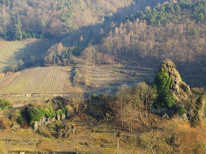 Blick von oben auf die noch nicht wieder ergrünten Weinberge