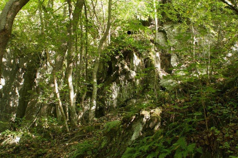 Ein Fels, grünes Gesträuch, ein einladender Platz mit Verlockung zum Abenteuer.