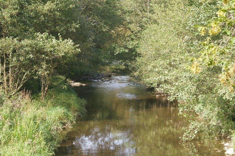 Der Hahnenbach fließt als ruhiges Gewässer unter jungen grünen Bäumen dahin.