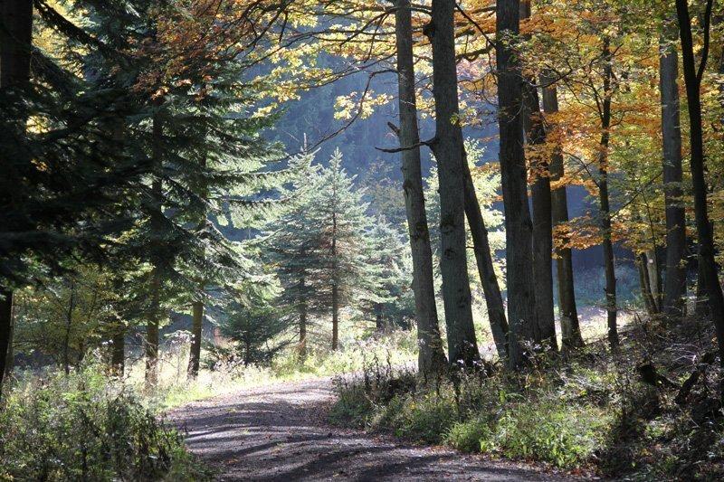 Herbstlicher Wald, ein Weg, herbstlich mildes Licht verschönert die Gruppenwanderung an der Ahr