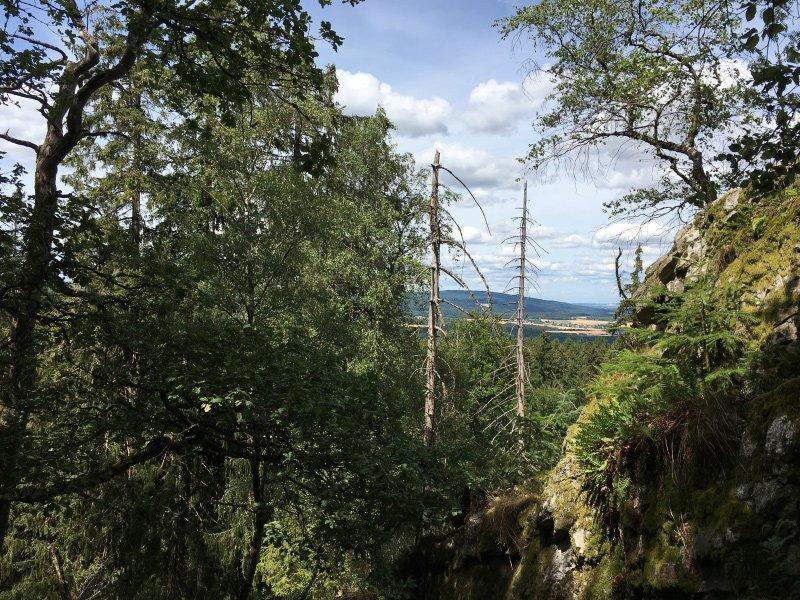 Beim Blick vom Wildenburgplateau stechen einem die abgestorbenen Stämme alter Fichten ins Auge