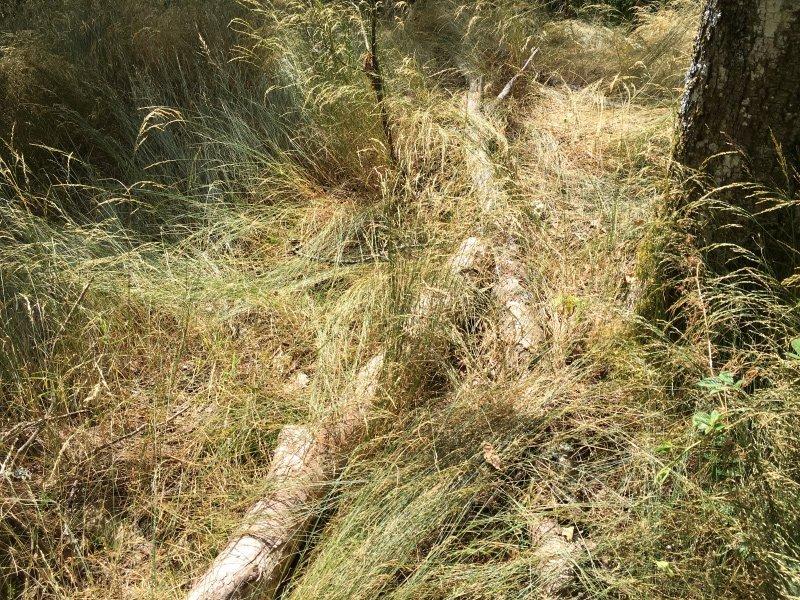 Braunes von der Sonne getrocknetes Gras begleitet den Abgang von den Kletterfelsen auf der Wildenburg