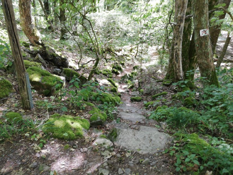 Schmaler Waldpfad über Steinstufen bilden den Einstieg