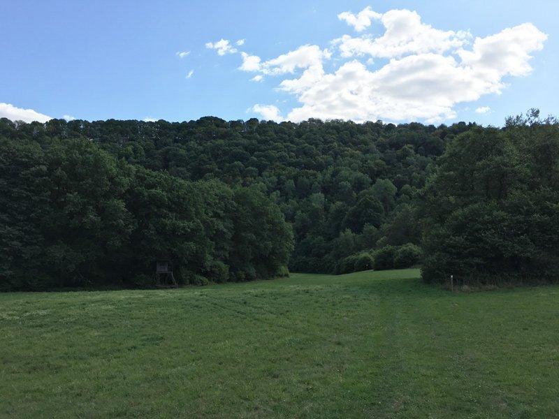 Eine große Weidefläche, inmitten des Waldes, der Verlauf des Nahesteigs ist hier kaum zu erkennen