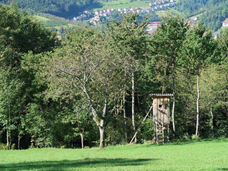 Im Vordergrund die Hangwiese, dahinter Obst- und Waldbäume, ein Hochsitz, darüber blauer Himmel