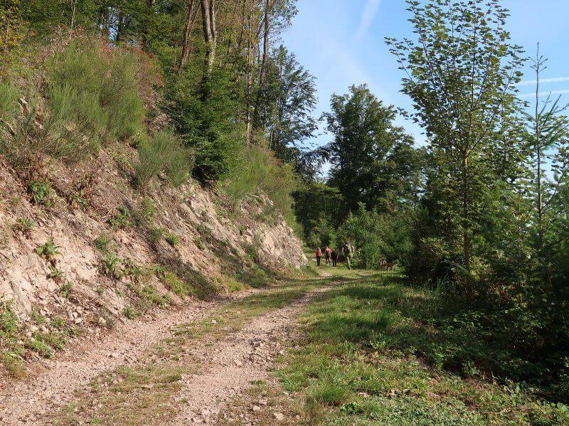 Breiter Weg am Hang, auch das ist Schwarzwaldsteig wandern.