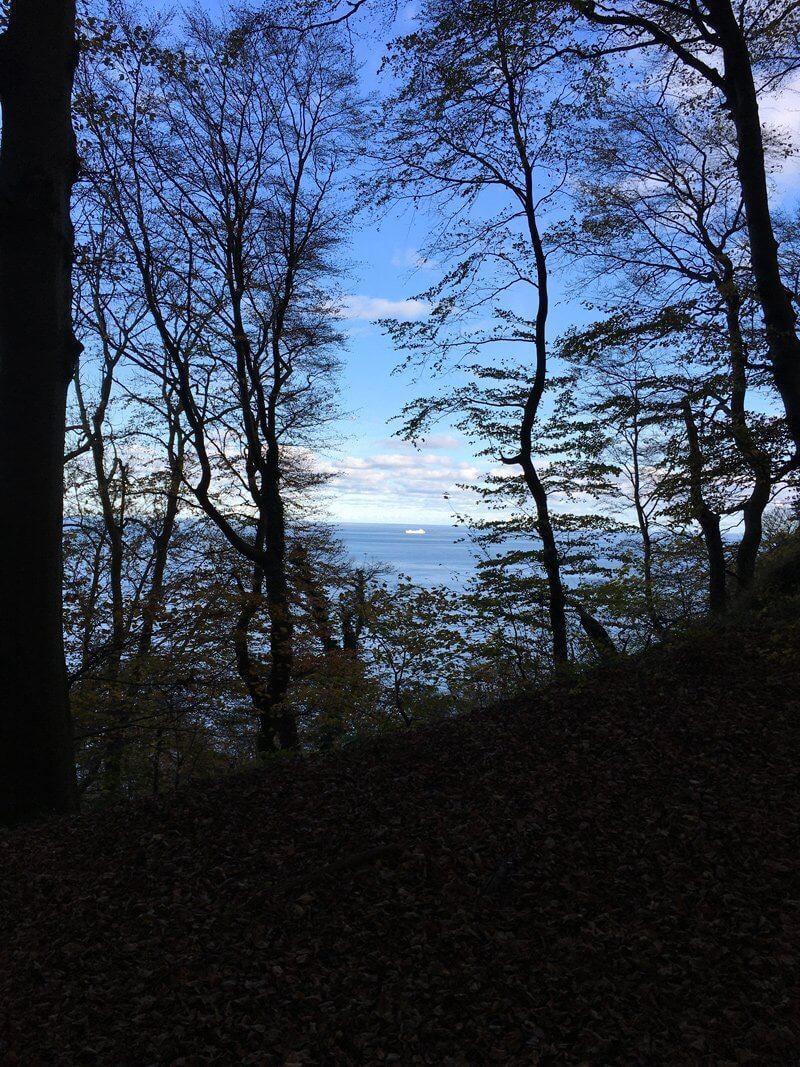 Blick durch die Buchen am der Kante der Klippen: Ganz klein erkennt man auf der blauen See ein leuchtend weißes Schiff