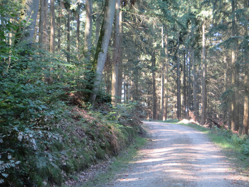 Ein breiter mit Schotter befestigter Waldweg, man sieht die geraden Stämme von Nadelbäumen. Durch die Zweige lässt sich erkennen, dass die Sonne scheint.