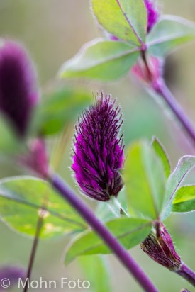 PurpleLongOne