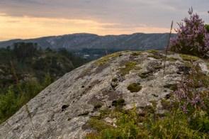 Foto av lyng og en stein
