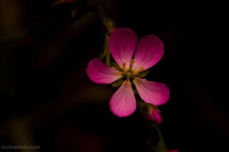 BlomstIMørket
