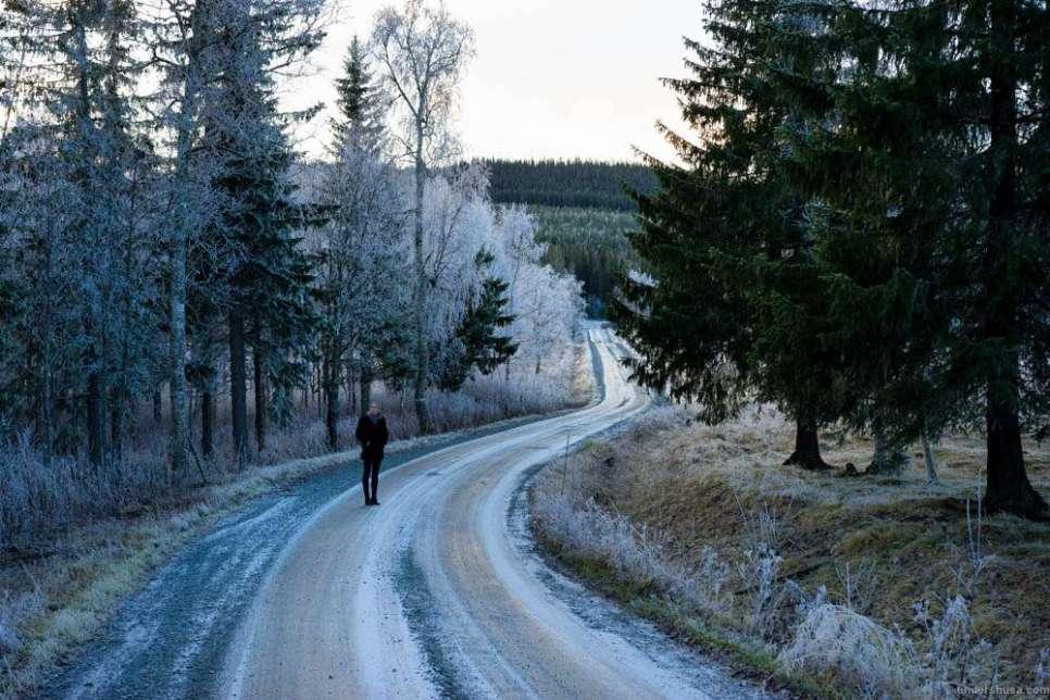 A walk in the Fäviken forest
