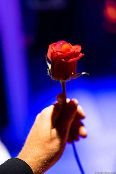 Vodka and raspberry rose