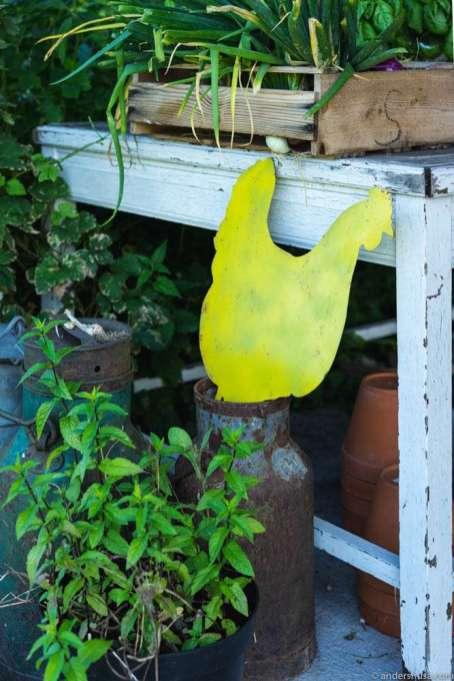 The yellow hen