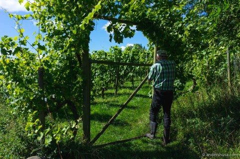 Lars shows the way into his small vineyard