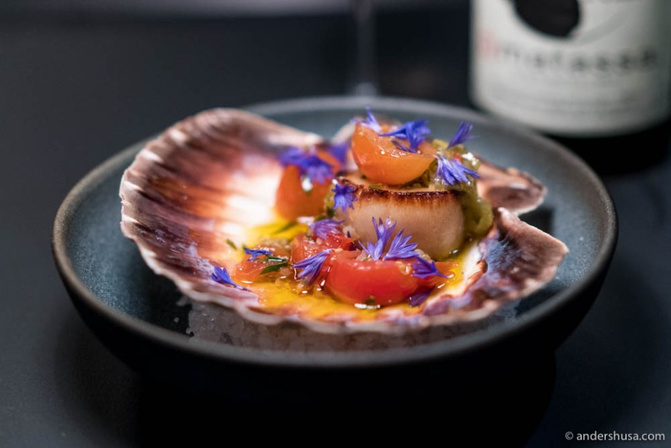 Scallop and tomatoes