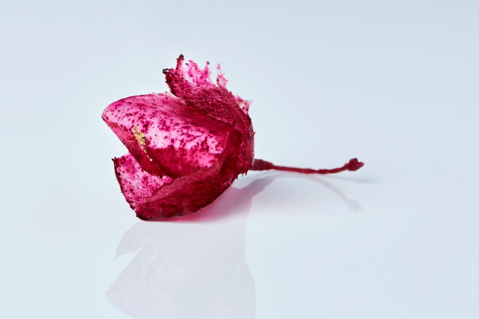 """This beautiful flower is actually made from thin, dried sheets of """"scoby"""", the yeast organism that is used to ferment kombucha. Photo: Claes Bech Poulsen"""