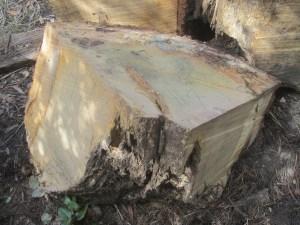 """#46. Oak (17"""" x 17"""" x 24"""")"""