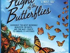 FLIGHT OF THE BUTTERFLIES (4K and BLU) 45