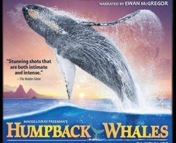 HUMPBACK WHALES 4K 3