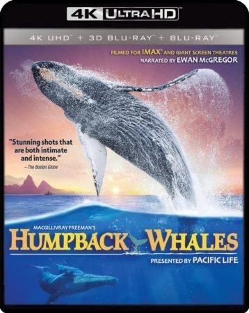 HUMPBACK WHALES 4K 1