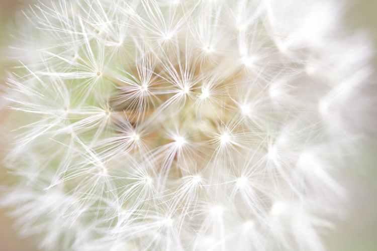 summer abstract grass blur