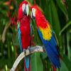 Parrots Jigsaw Puzzle