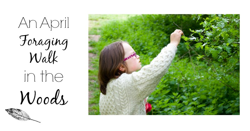 An April Foraging Walk in the Woods
