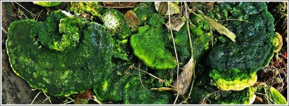 green_funghi