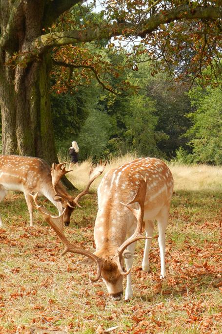 20140907_richmond_park_autumn_0374