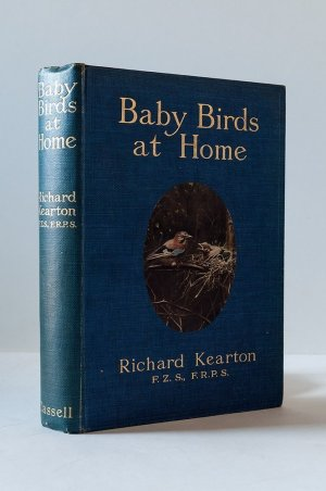 Baby Birds at Home