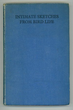 Intimate Sketches from Bird Life