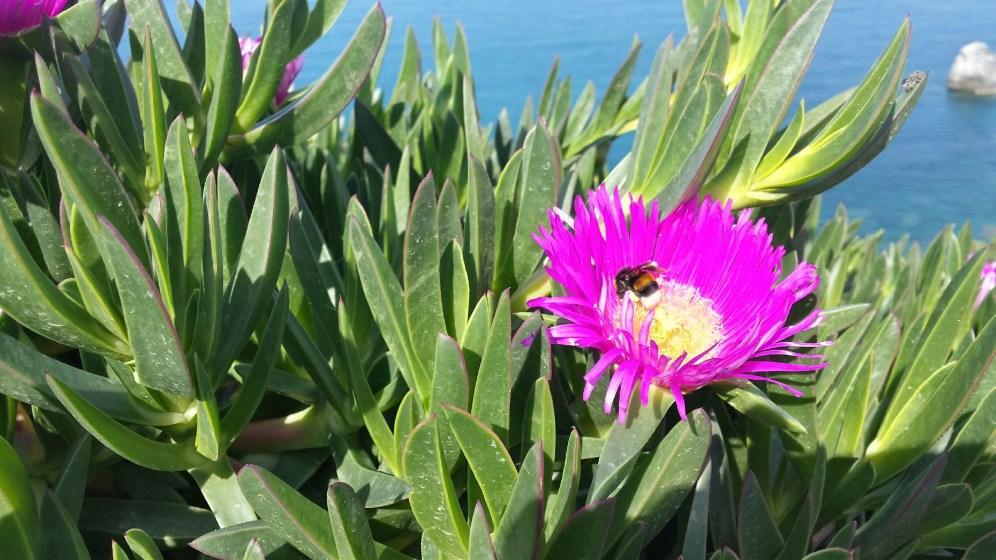 Busy bubble bee-skopelos-andonis radistis