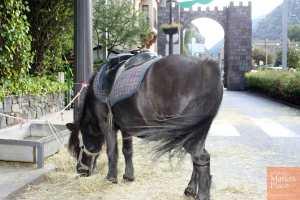 Poni en la Fira Medieval