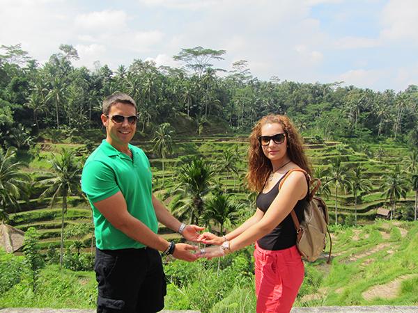 Campos de arrozales