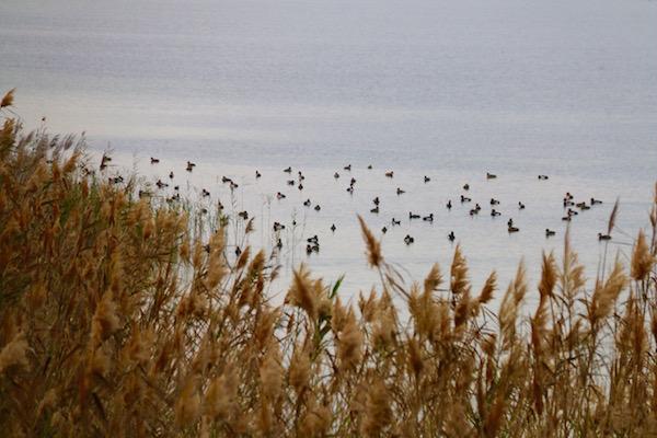 Reserva Punta Entinas Sabinar