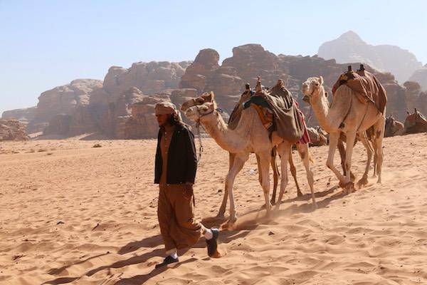 Wadi Rum Camello