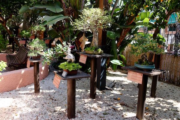 Jardín Museo Bonsái.