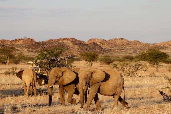 Elefantes Desierto.