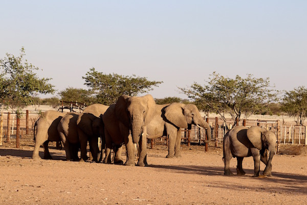 Elefantes Desierto