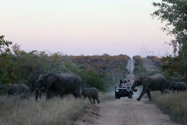 Manada elefantes