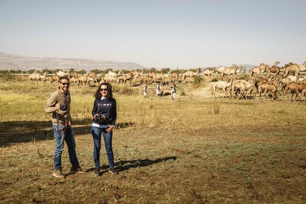 Fotografía manada camellos