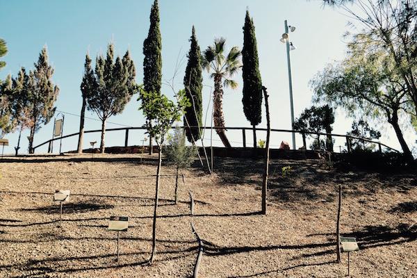 Árboles Jardín Botánico