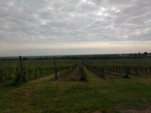 Mit Blick in die Rheinebene