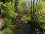 Ein lichter Wald und ein kleiner Bach