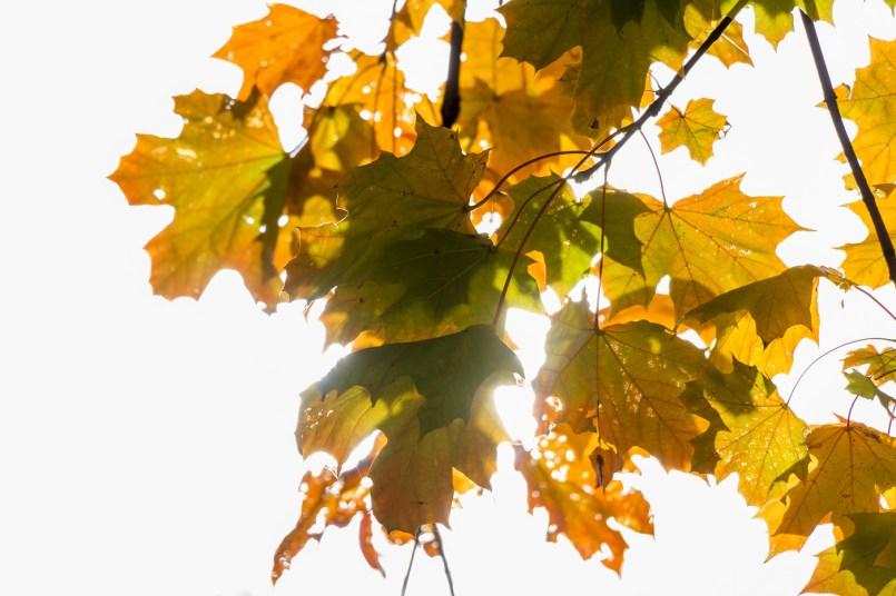 #Herbst #Autumn #Fall #Blätter #Leaves