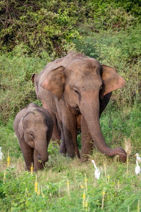 Browsing Elephants