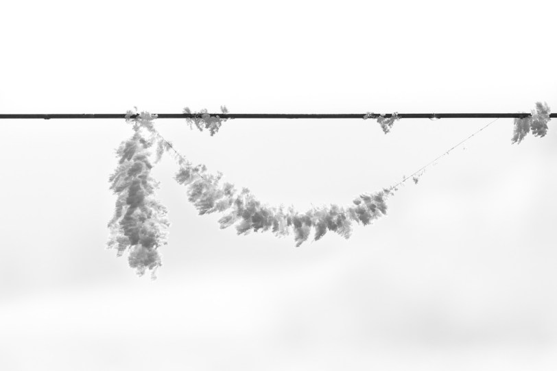 Hanging frosty ice flowers
